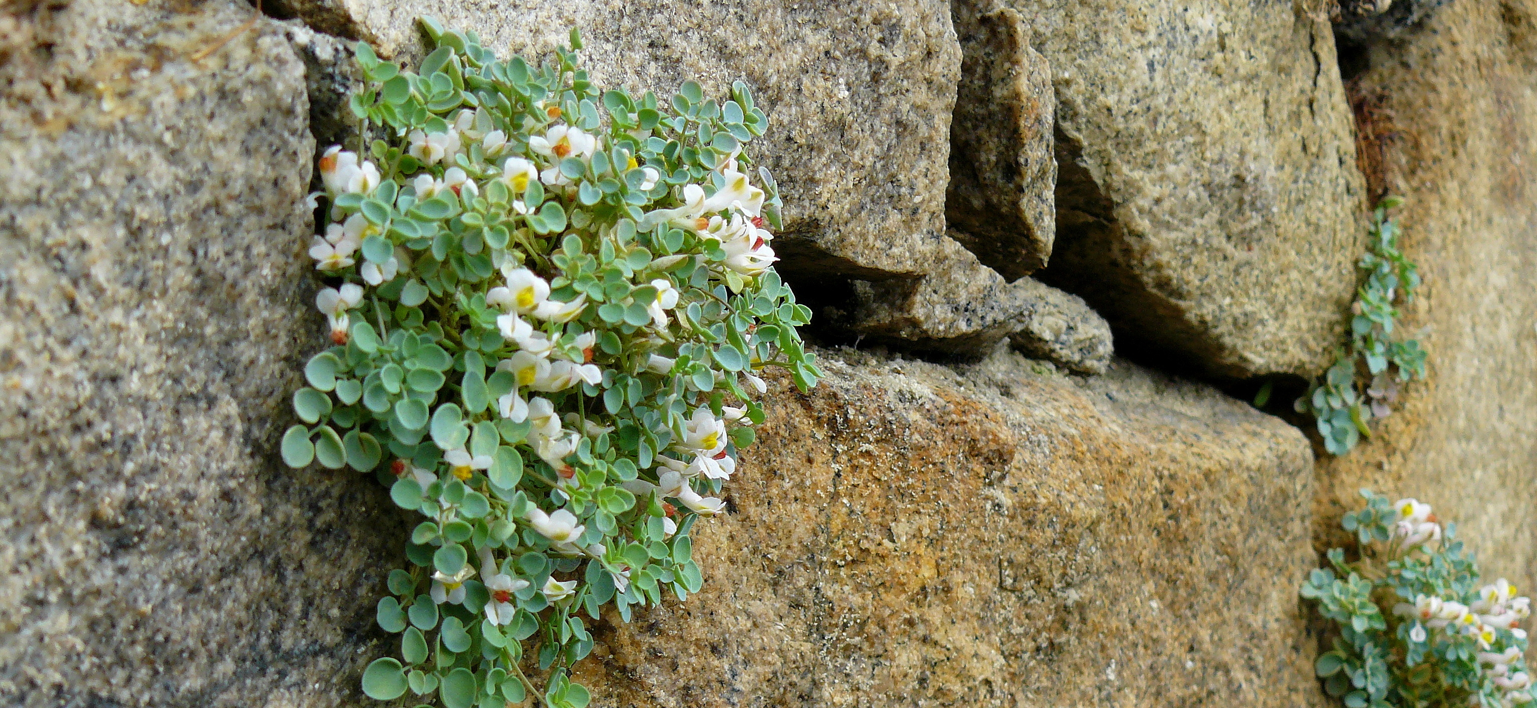flowers in rock wall