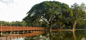 tree by water in Sukhothai