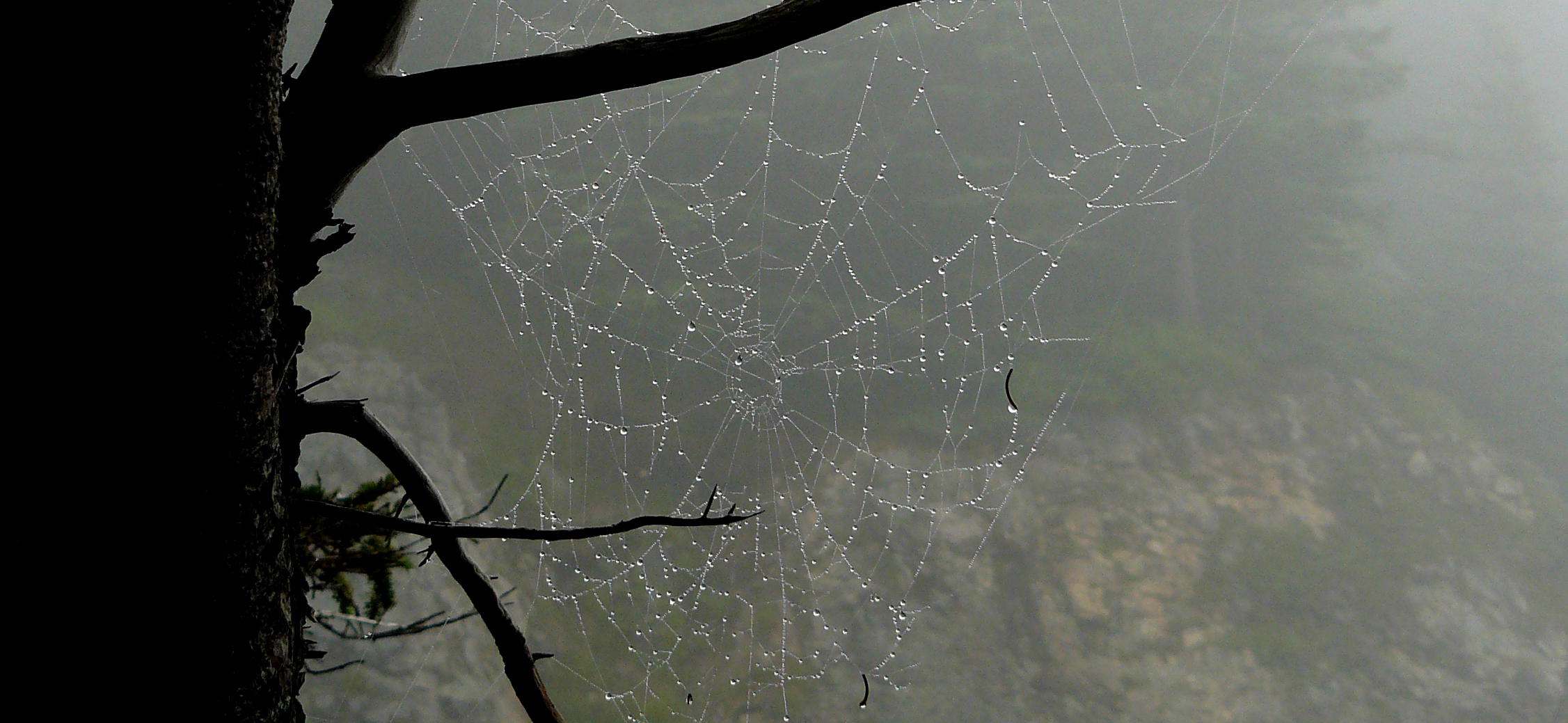 spider web in the mist