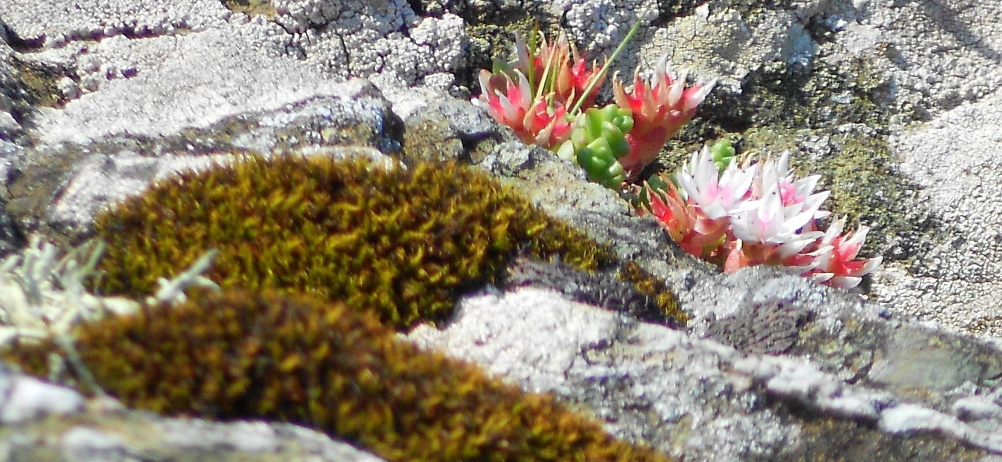 lichen blooming